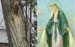Virgin+Mary+spotted+in+a+tree+Illusion.jpg